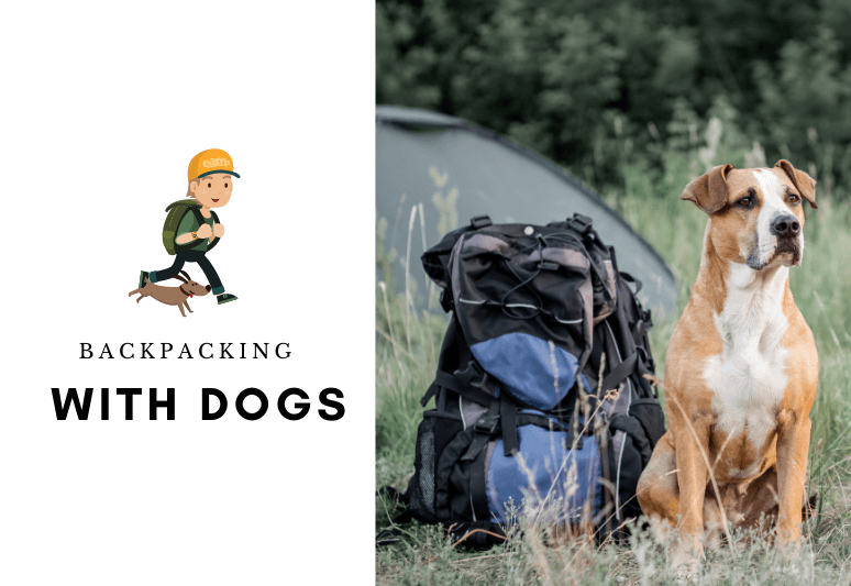 backpacking with dogs - camping with dogs