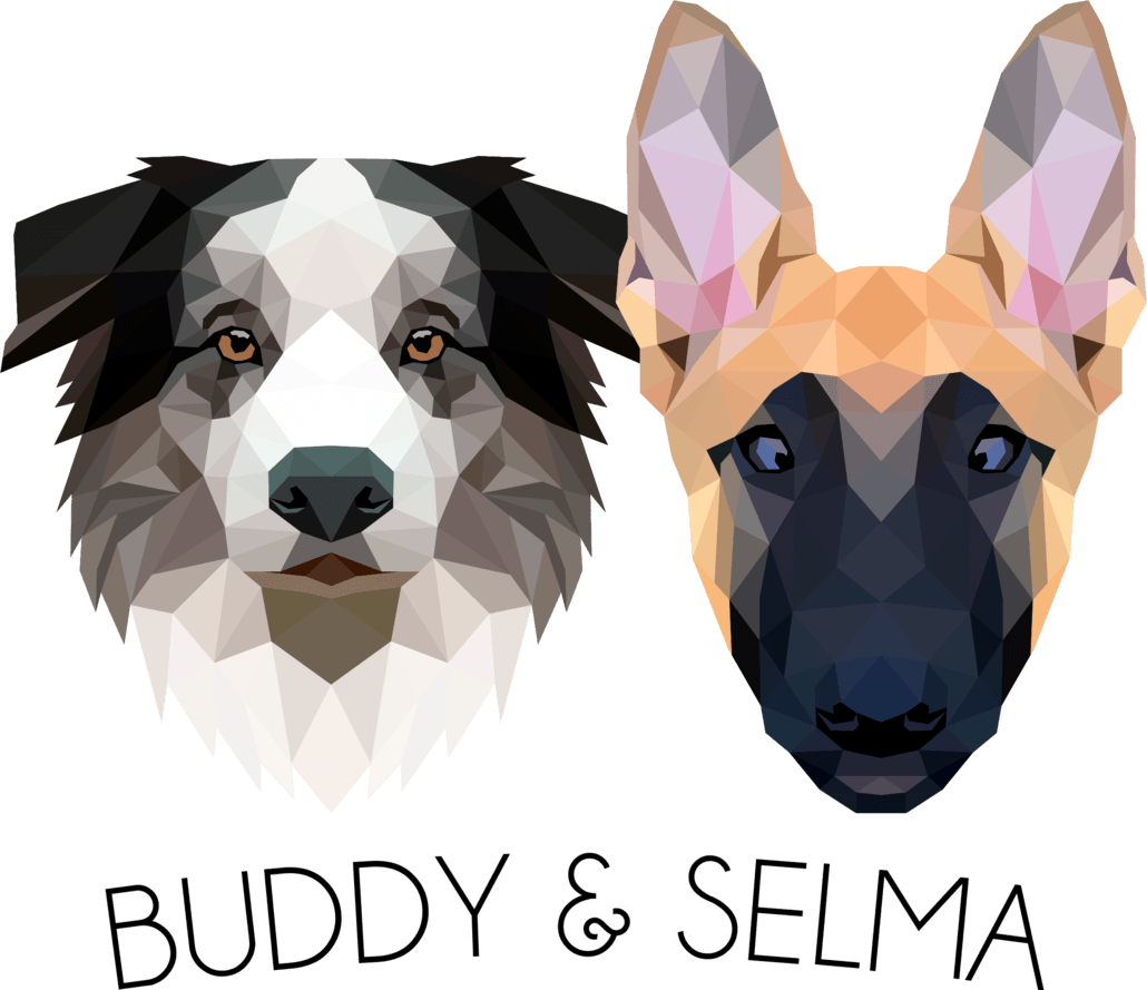 BUDDY _ SELMA_ the collienois dog training blog