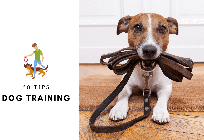 50 Best Dog Training Tips [INFOGRAPHIC]