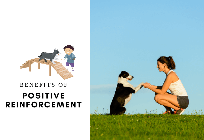 The Positive Reinforcement 10 Advantages & Benefits - clicker training