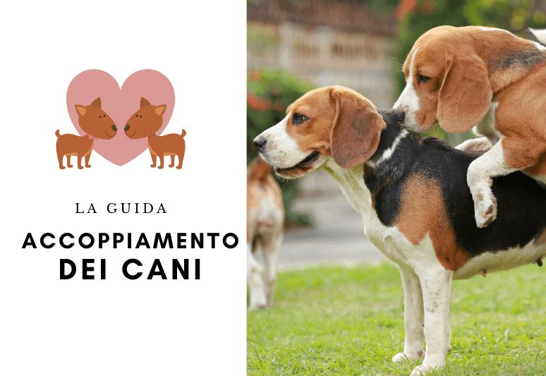 Accoppiamento dei cani (1)
