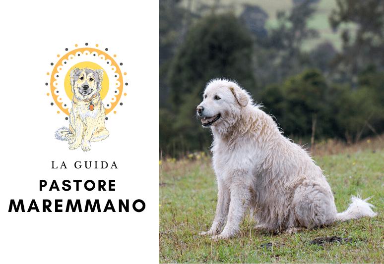 La guida sul cane pastore maremmano