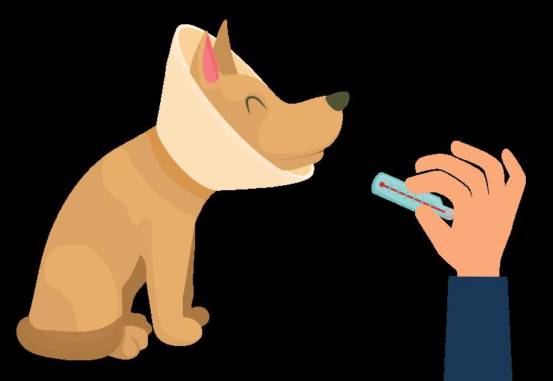 come misurare la febbre al cane - come capire se il cane ha la febbre - febbre cane (2)