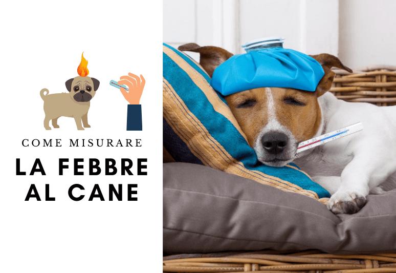 come misurare la febbre al cane - come capire se il cane ha la febbre - febbre cane