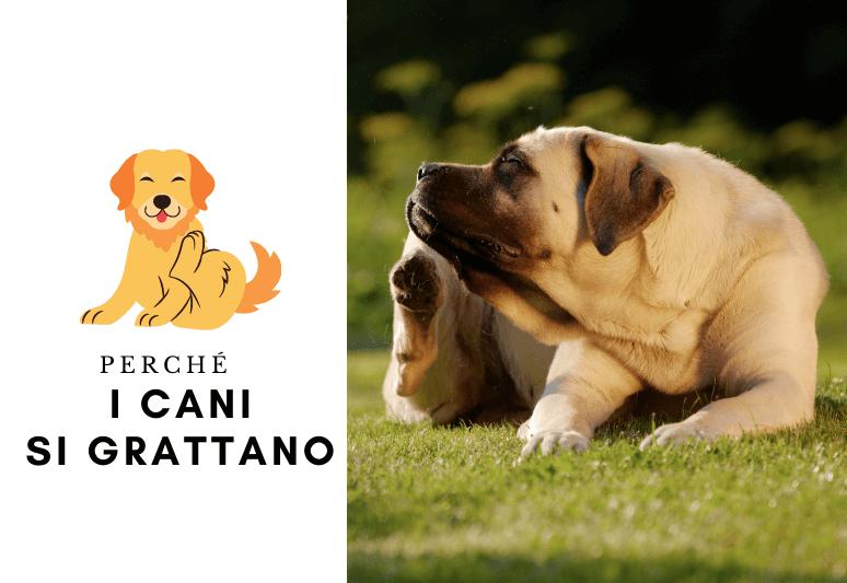 perché i cani si grattano - il mio cane gratta, cosa devo fare? 1