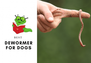 5 BEST DOG DEWORMER FOR DOGS - How to deworm a dog or a puppy (1)