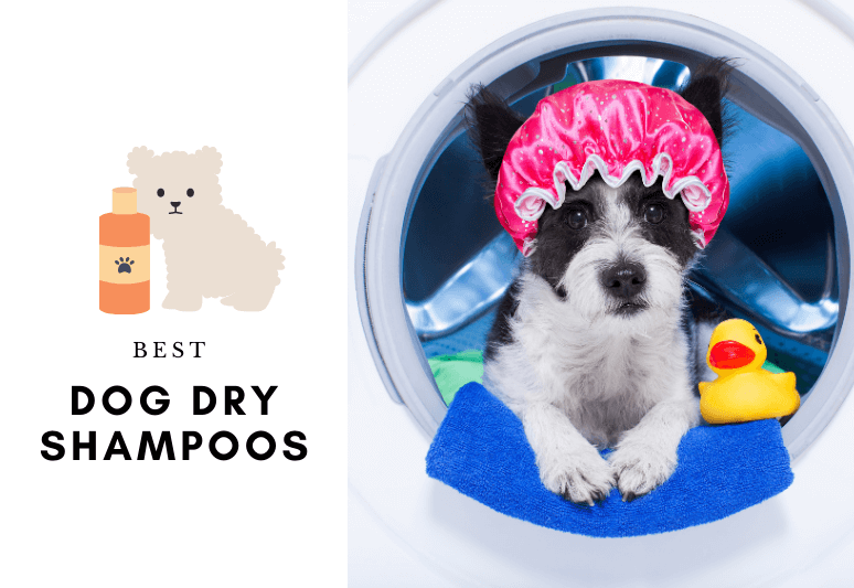 5 BEST DRY SHAMPOOS FOR DOGS - How to wash a dog - dry shampoo for dogs
