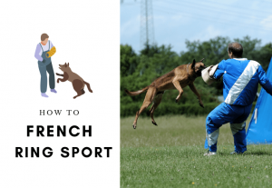 How to train your dog french ring sport - protection dog training - how to teach dog schutzhund (1)