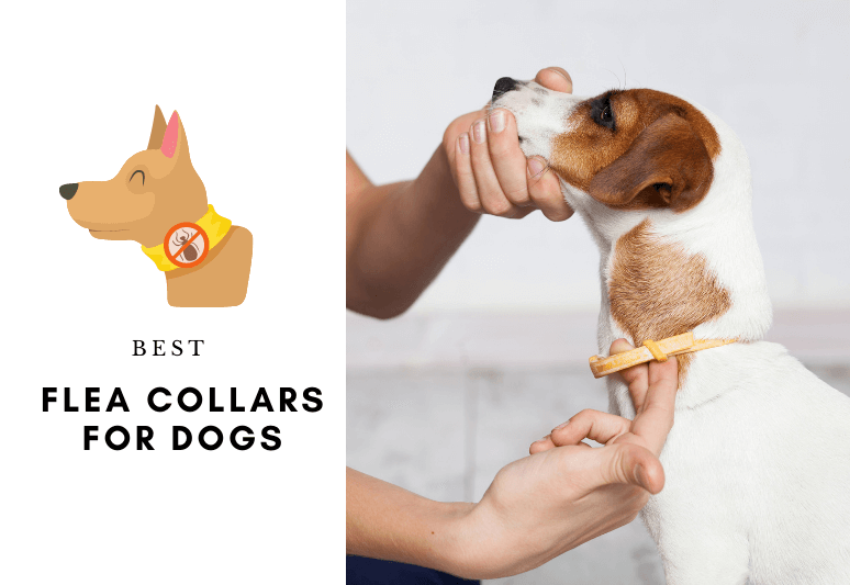5 BEST FLEA COLLARS FOR DOGS - How to protect a dog or a puppy from ticks and fleas