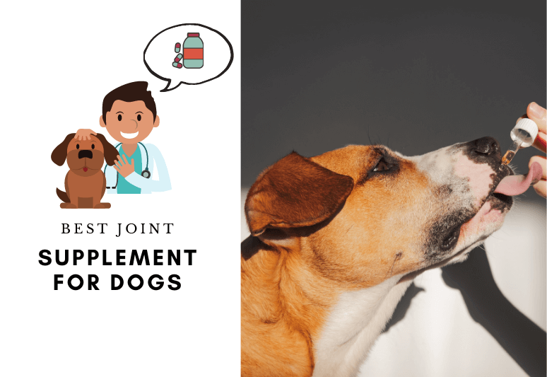 Best Joint Supplement For Dogs - 6 best dog joint supplement for dogs - best joint supplement for dogs