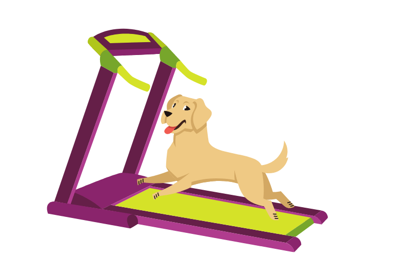 Best Treadmills For Dogs - top rated dog treadmills - Treadmill for my dog