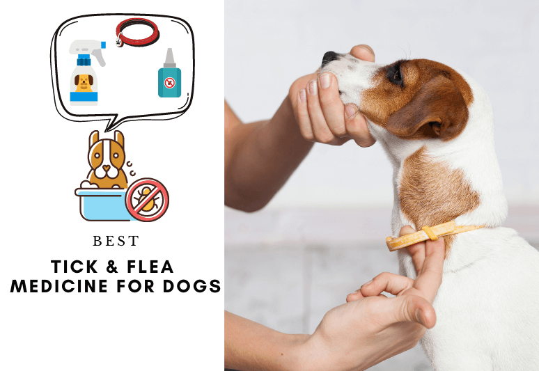 Best flea medicine for dogs The 7 Best tick medicine for dogs - how to prevent ticks and fleas on dogs with spot on, tablettes and collars (7)