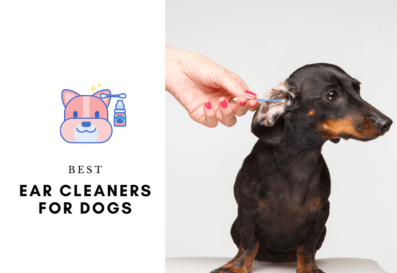 Ear Cleaners for dogs best dog ear cleaner for dogs