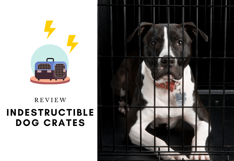 Indestructible Dog Beds The 7 Best Chew-Proof Dog Beds - Resistant beds for dogs