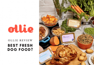 Ollie Dog Food Review Is It The Best Fresh Dog Food - Tasting Dog Food for Picky Eaters 1