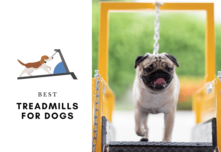 The 7 Best Treadmills For Dogs - top rated dog treadmills - Treadmill for my dog