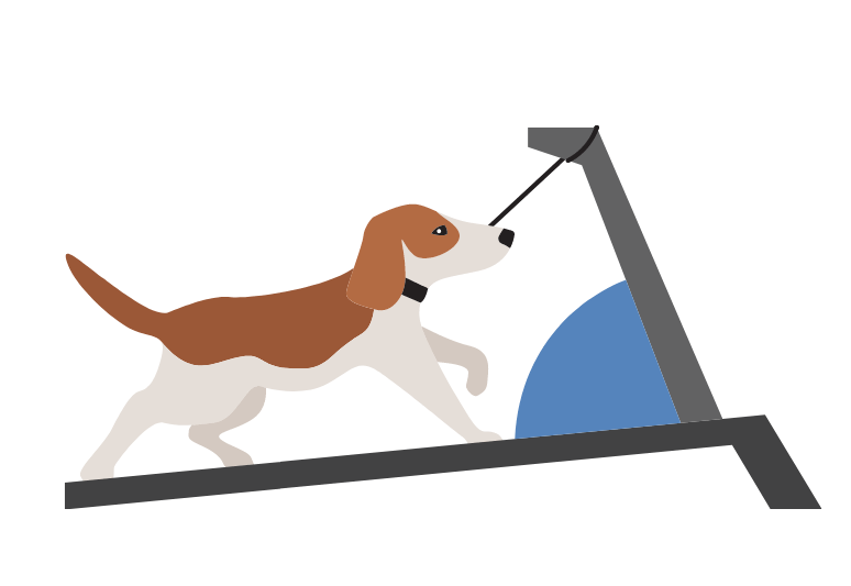 The 7 Best Treadmills For Dogs - top rated dog treadmills - Treadmill for my dog (1)