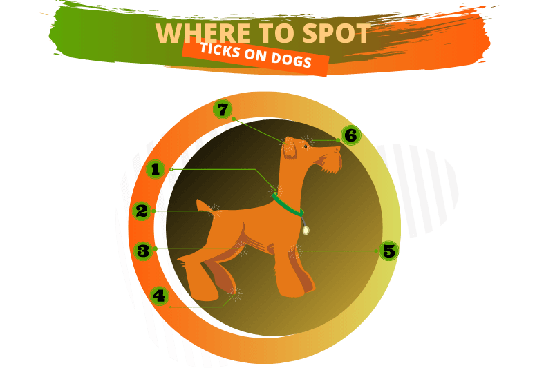 How to identify a tick on a dog (with infographics) 2