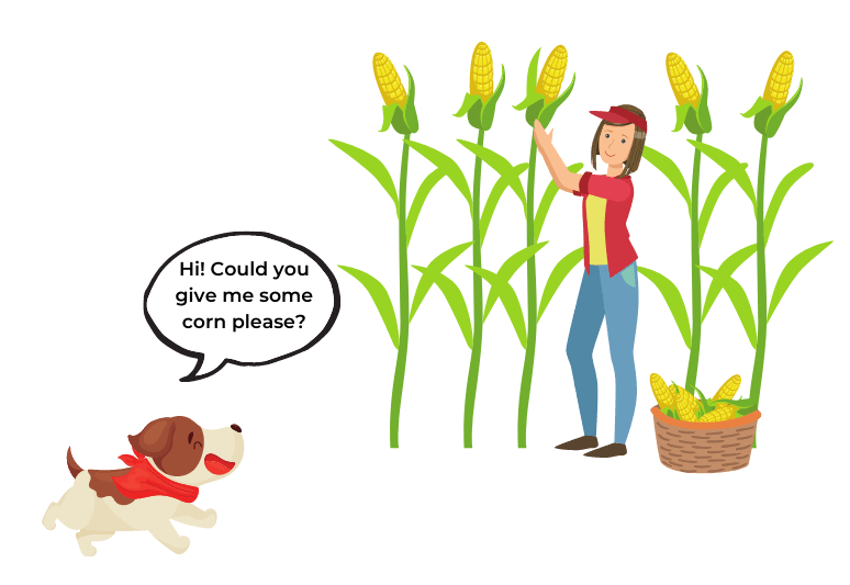 is sweet corn good for dogs – Can I give my puppy sweet corn – Is canned corn OK for dogs