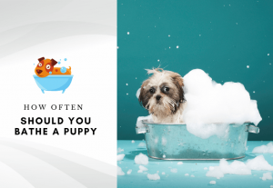 How often should you bathe a puppy –Can I bathe my puppy once a week