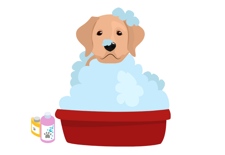 How often should you bathe a puppy –Is it bad to bathe your dog every week?