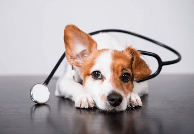 How to clean a puppy's ears at home: a handy guide (11 steps) 7