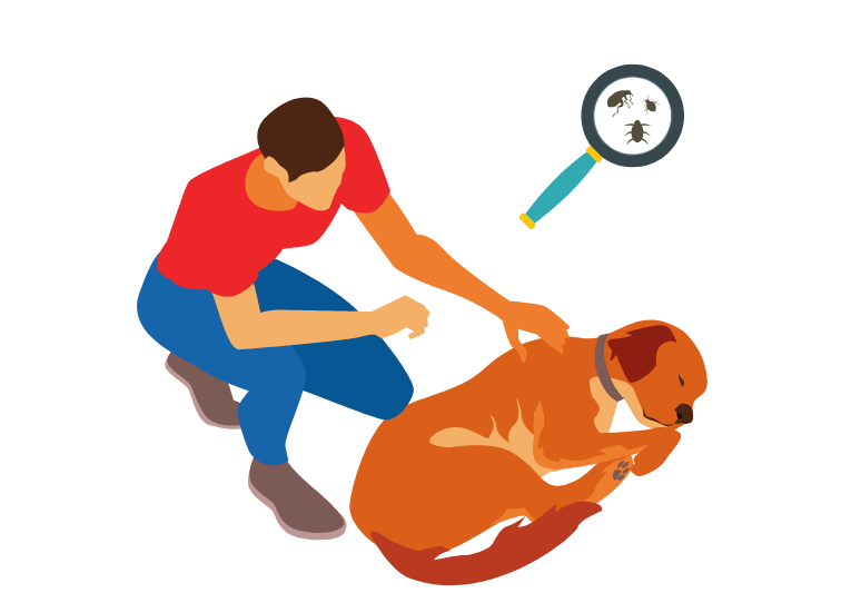 How to Find, Treat, and Prevent Fleas on Puppies - How to Get Rid of Fleas on Dogs, Naturally!