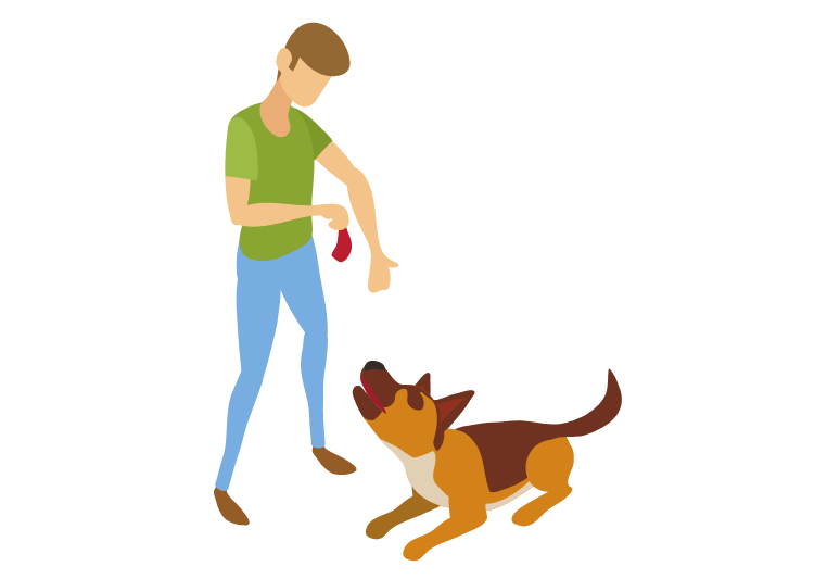 How to train a disobedient dog - how to treat disobedience in dogs (2)