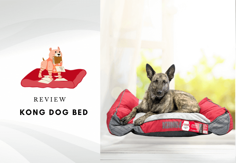 kong dog bed reviews - kong beds are really indestructible - chew resistant kong beds