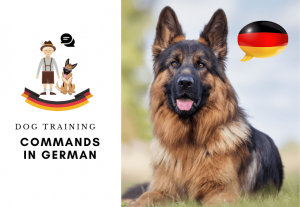 List of Dog Training commands in German - German command for dogs - How to Train a dog in german (3)