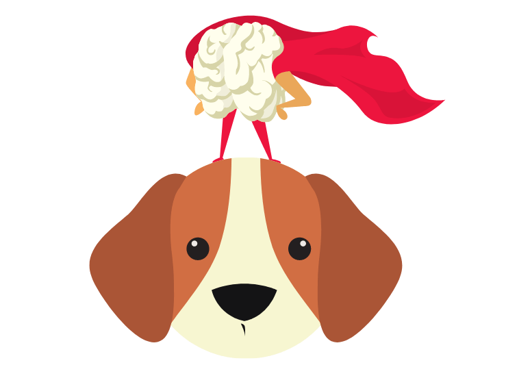 Mental stimulation games for dogs – how to stimulate your dog's brain 2