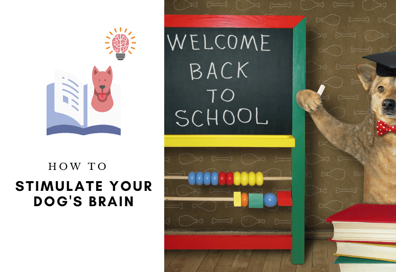 Mental stimulation for dogs – how to stimulate your dog's brain - how to keep a dog mentally stimulated (1)
