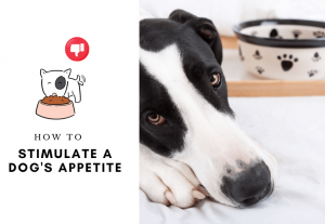 How to Stimulate a Dogs Appetite - why is my dog not eating his food
