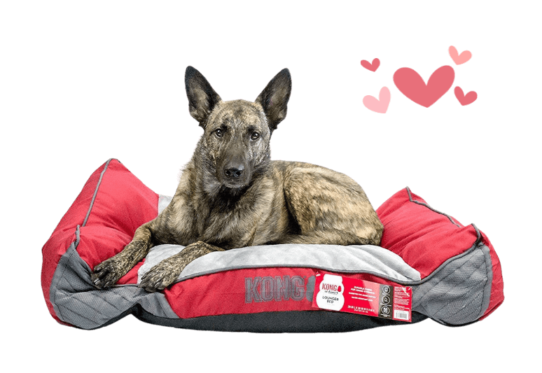 kong dog bed reviews - kong beds are really indestructible - chew resistant kong beds (2)