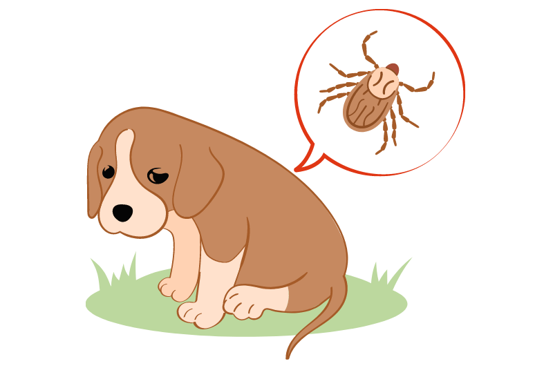 what are dog ticks - how to prevent ticks to bite my dog (2)