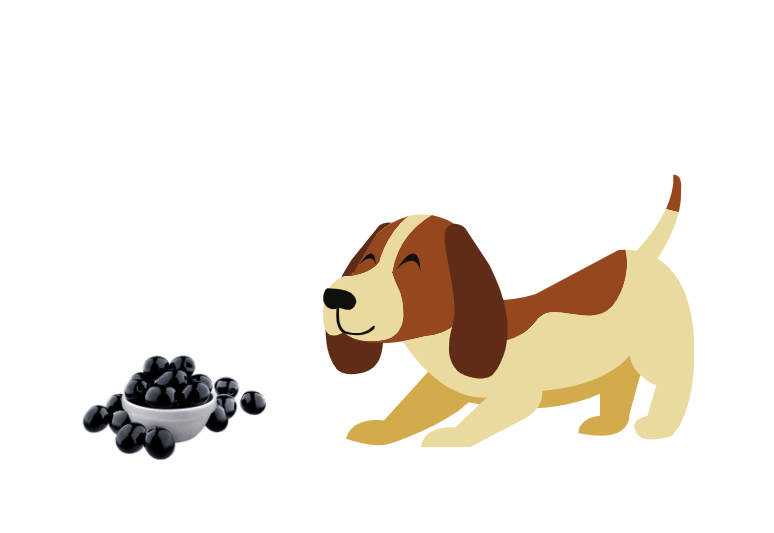 Can dogs have black olives - are black olives harmful to dogs