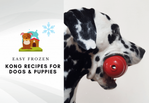 Best Frozen Kong Recipes For Dogs And Puppies - how to stuff a kong