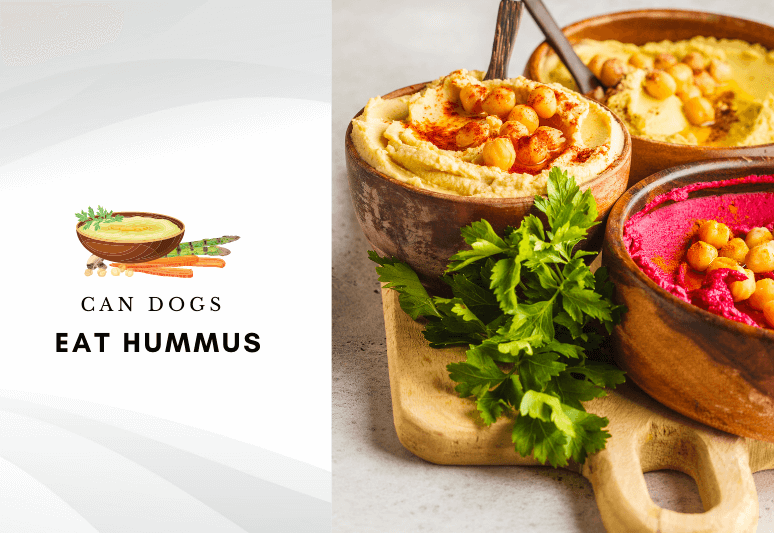 Can dog eat hummus – Hummus for dogs – can dogs have hummus - Are chick peas safe for dogs