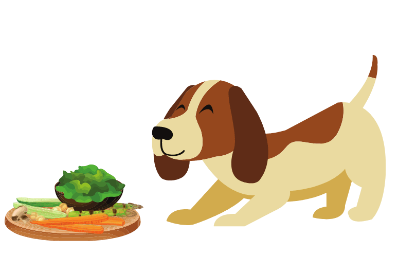 Can dog eat seaweed – seaweed for dogs – can dogs have seaweed -
