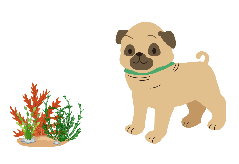 Can dog eat seaweed – seaweed for dogs – can dogs have seaweed