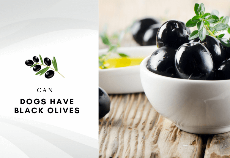 Can dogs have black olives - are black olives harmful to dogs – can i give my dog black olives