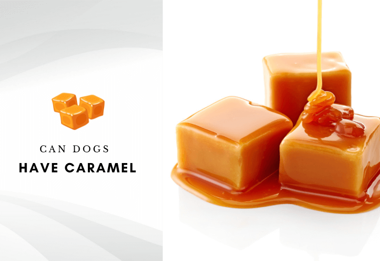 Can dogs have caramel- is caramel safe for dogs - can my dog eat caramel