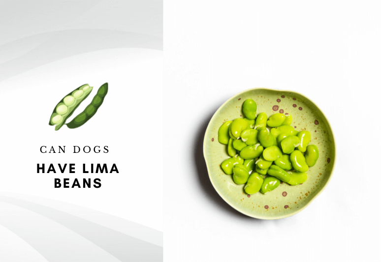 Can dogs have lima beans - are lima beans safe for dogs