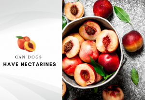 Can dogs have nectarines - are nectarines safe for dogs - can my dog eat nectarine
