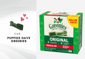 Can puppies have greenies - can dogs eat greenies - are greenies safe for puppies and dogs