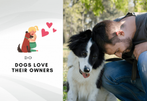 Do Dogs Love Their Owners More Than Themselves - Do dogs know we love them