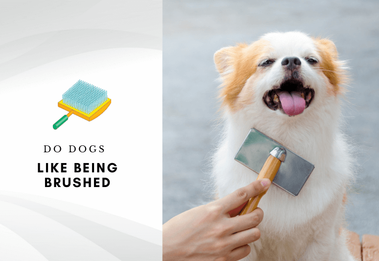 Do dogs like being brushed - Do dogs enjoy being brushed