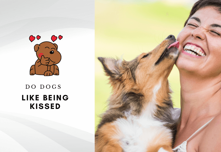 Do dogs like being kissed - Do dogs enjoy human kisses