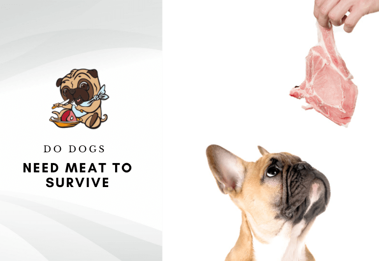 Do dogs need meat to survive - can dogs survive without meat