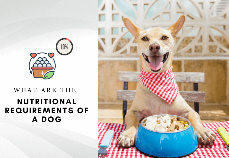Dog nutritional requirements percentages – What are the nutritional requirements of a dog-2
